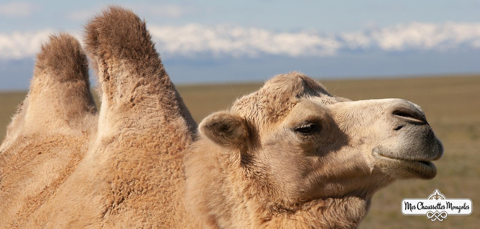 La chaussette en duvet de chameau